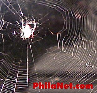 Spider & Spiderweb